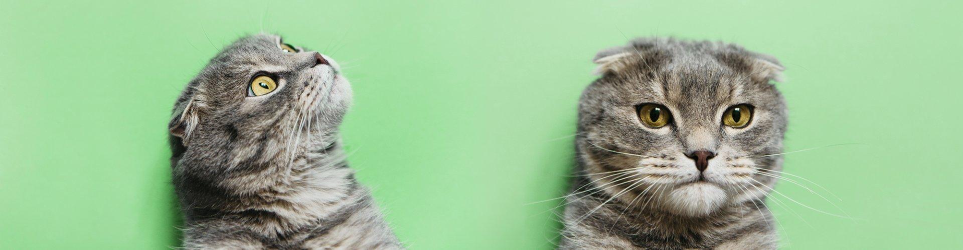 кот, сберкот, сбербанк