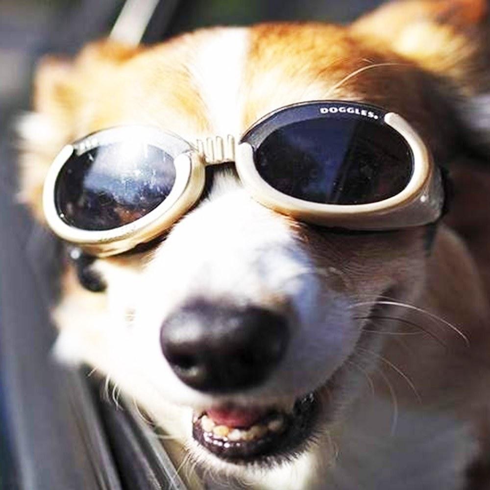 10 глупых идей на миллион: солнечные очки для собак