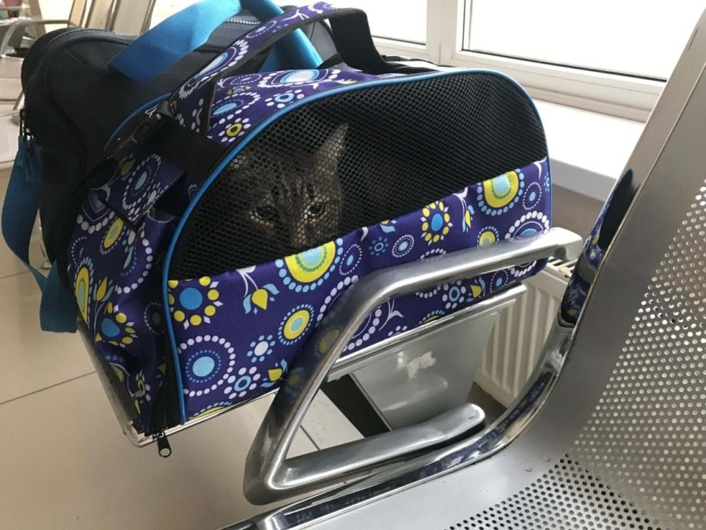 кошка, переноска