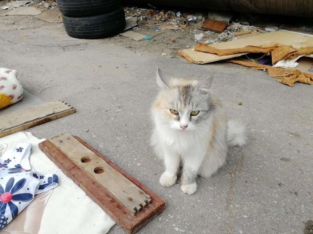 кошка, улица, трубы