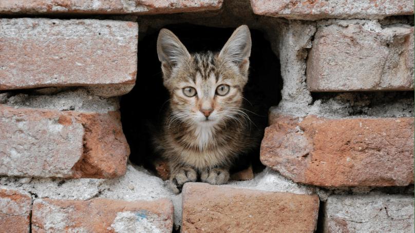 кот, подвал, ТСЖ
