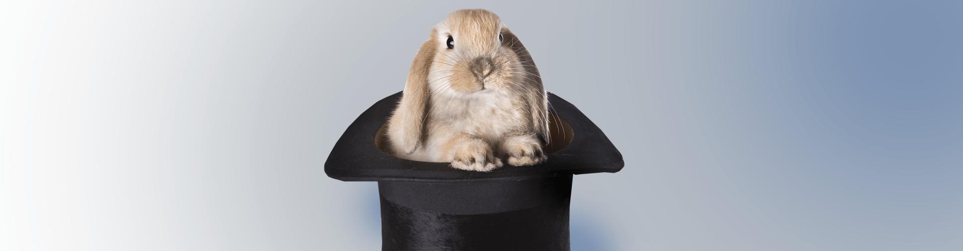 кролик, фокус, шляпа