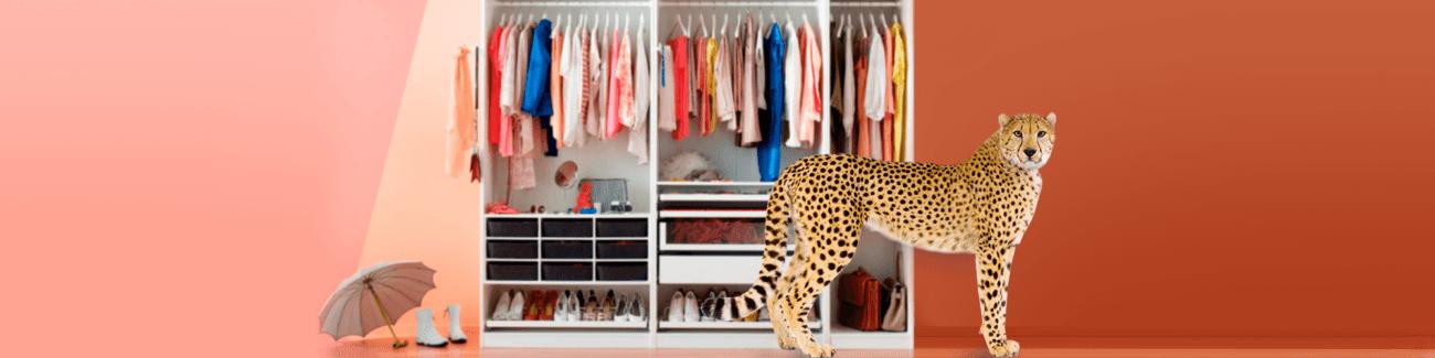леопард, гардероб, вещи