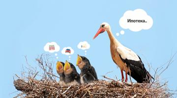 ипотека, птенцы, мечты, гнездо