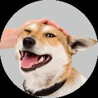 довольный пес
