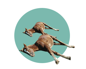 лошадь лежит на земле