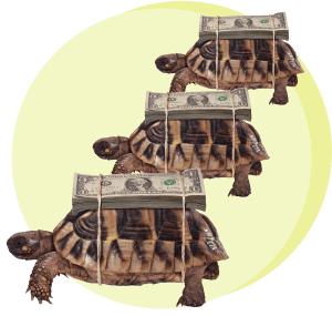 черепаха, деньги, гонки