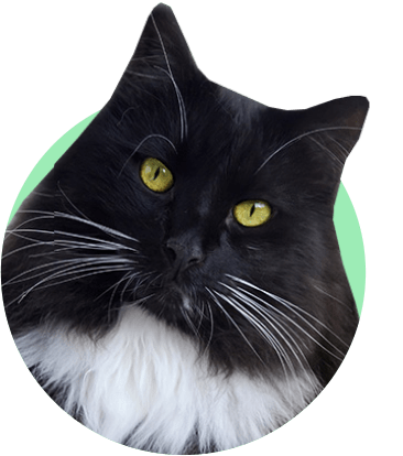 черный кот, Томмазино