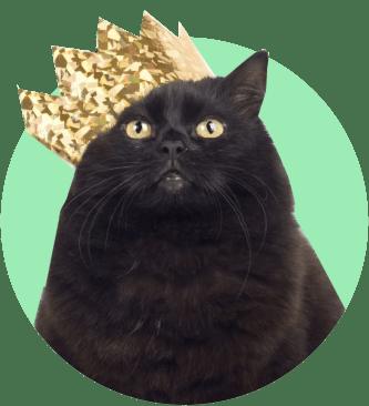 Блэки, черный кот