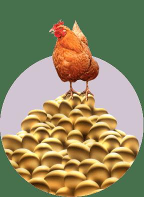 курица золотые яйца