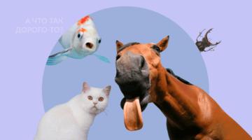 дорогие животные, лошадь, кот, жук, рыба