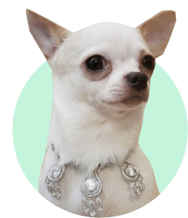 Собачий ошейник в 52 карата