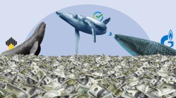 кит кашалот акула море денег