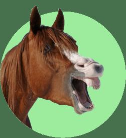 Вакансия - конюх, ухаживатель за лошадьми