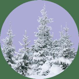 Декабрь: расширяем горизонты