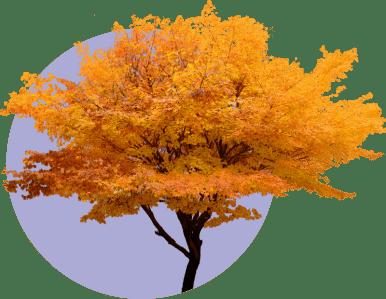 Сентябрь: учимся договариваться