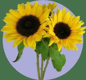 Август: самодурство не на пользу