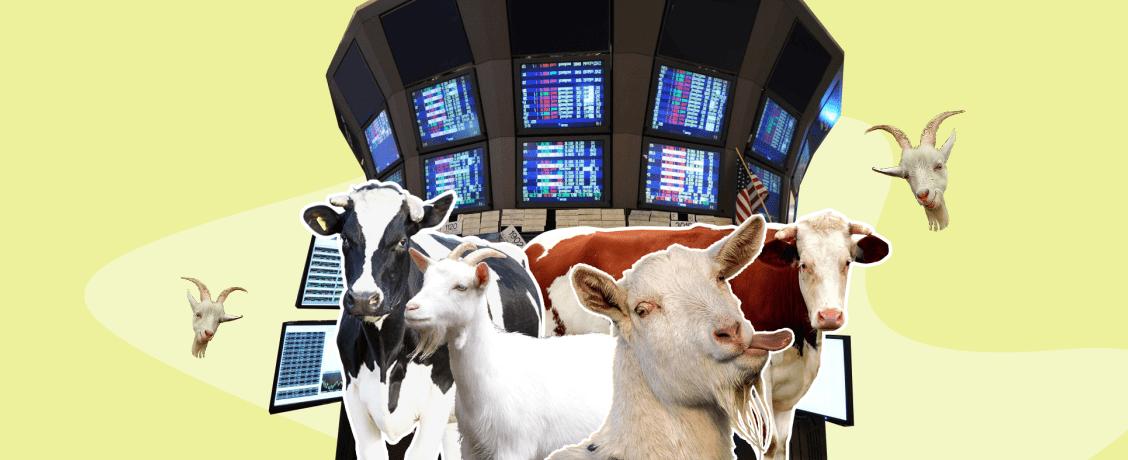 Вкусная и здоровая пища в эпоху экономии: выйдет ли «Вкусвилл» на IPO в 2021 году