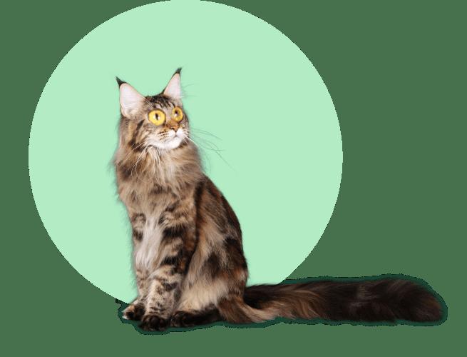 Кредит на котика
