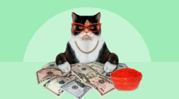 Котик в ипотеку: самые странные истории с кредитами за 10 лет