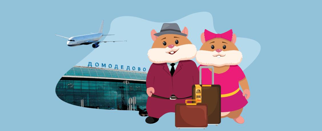 Вредные советы: как не переплатить за багаж при перелете
