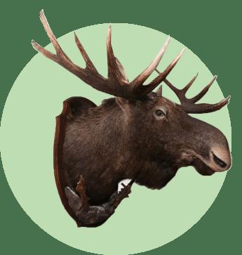 Продажа охотничьих трофеев