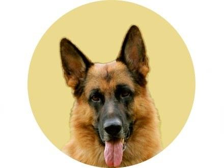 Гюнтер IV, потомственный пес-миллионер