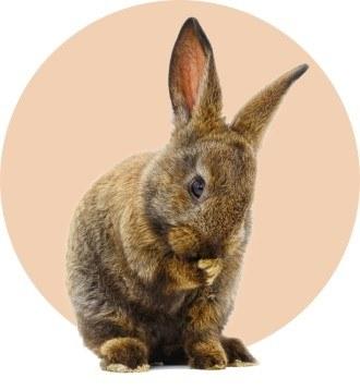 «По следу зайца вижу, на жировку шел или на лежку»