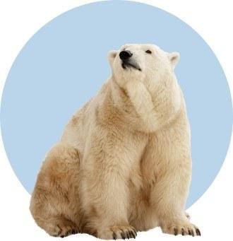 Россиянам раздают землю в Арктике