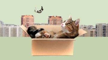 Пусть за квартиру платит государство! Обзор всех жилищных льготных программ в России