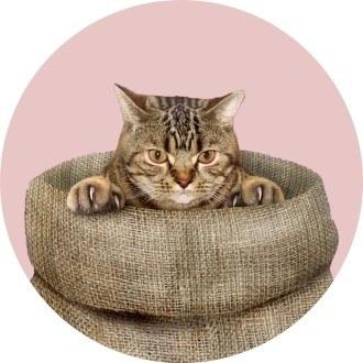 Кот в мешке, или Почему покупать конфискованное жилье рискованно