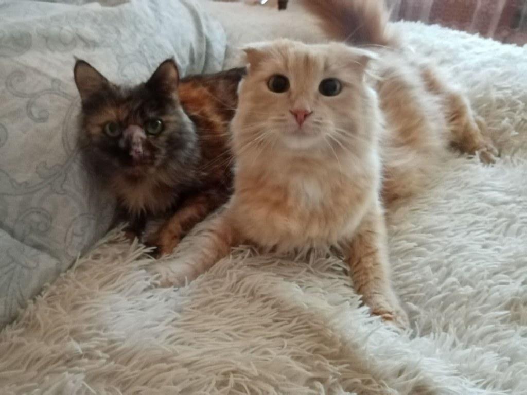 Пеструша и Персик