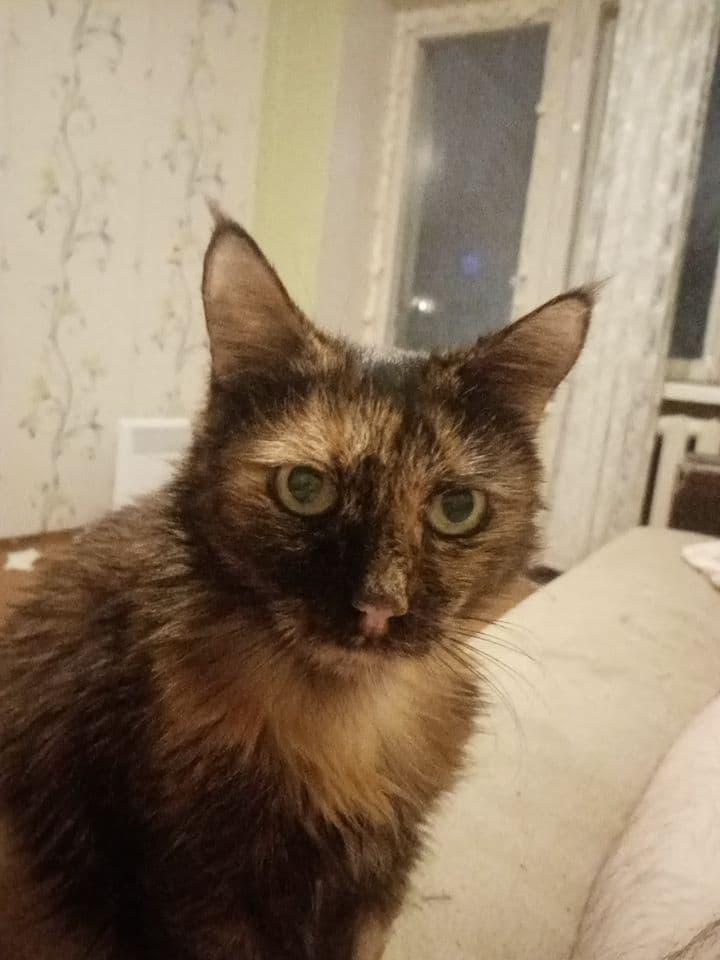 Кошка Пеструша