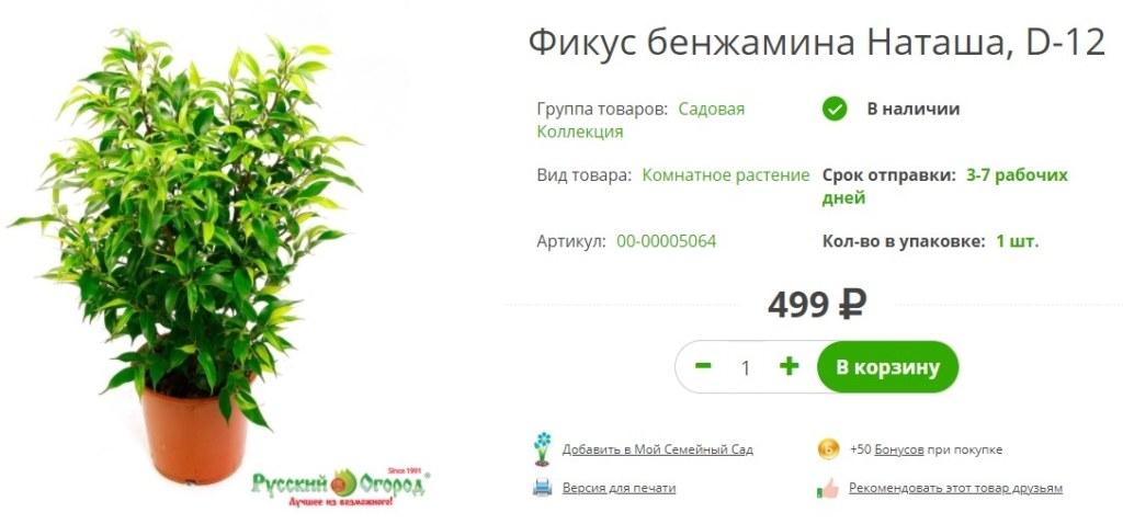 Живое растение