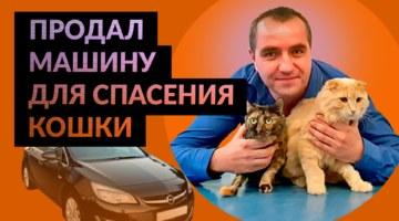 продал машину ради спасения кошки