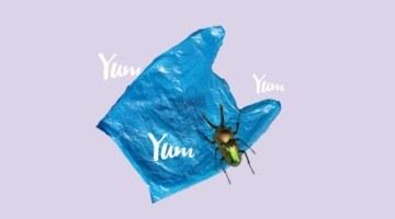 Стартап с насекомыми: российские ученые придумали жучиные фермы для переработки пластика