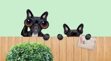 Секретные материалы на фондовом рынке: что такое инсайдерская информация