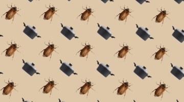 «Почти как чипсы». Как заработать на еде из сверчков и личинок мух: личный опыт